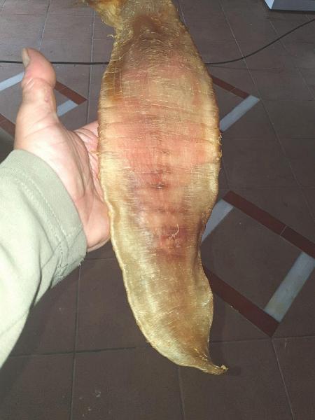 Fish Maw Dried